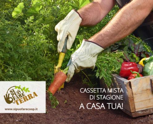 SPF_cassetta